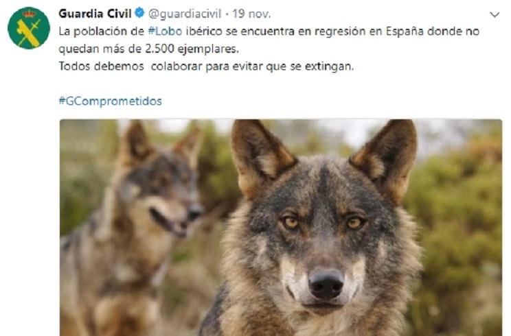 La Guardia Civil difunde información falsa sobre la población de lobo en Twitter