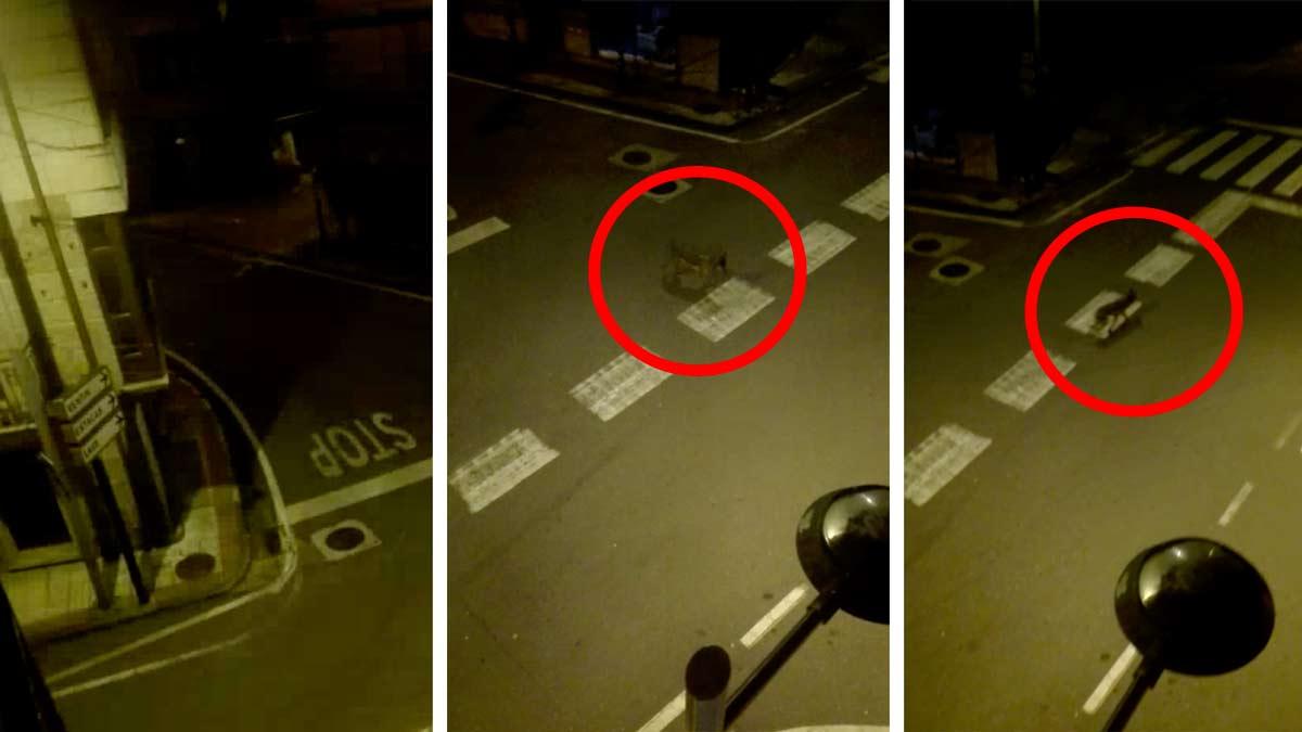 El vídeo de un lobo paseando por un pueblo de Galicia se vuelve viral en plena cuarentena
