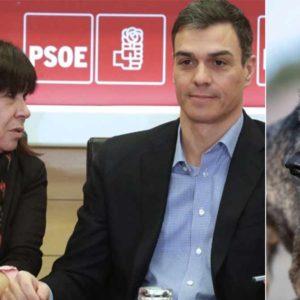 La presidenta del PSOE anima a los animalistas a denunciar a Castilla y León para blindar al lobo