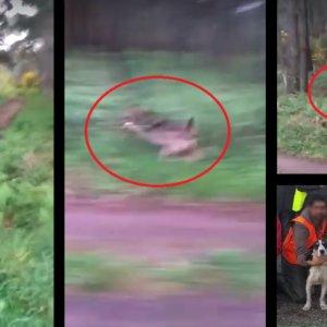 Un lobo rodea a un cazador e intenta llevarse a su perra