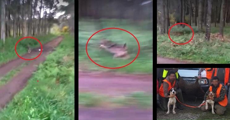 lobo rodea cazador y a su perra