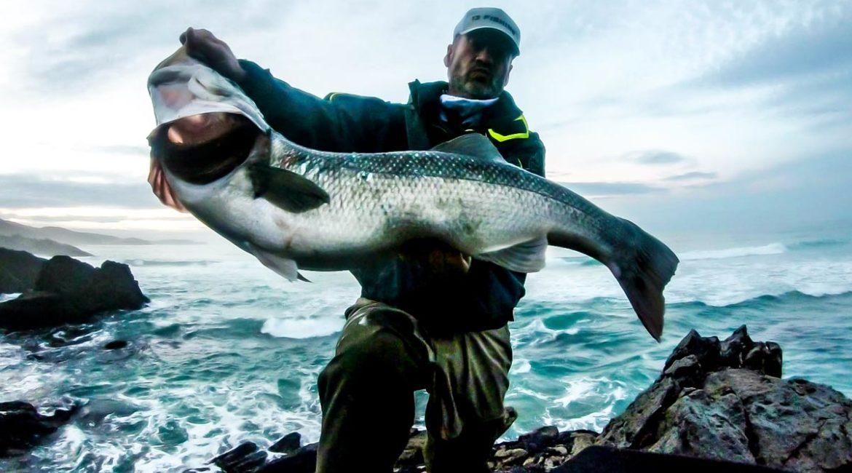 Pesca una monstruosa lubina de 8,2 kilos en Galicia con un misterioso señuelo que quiere patentar