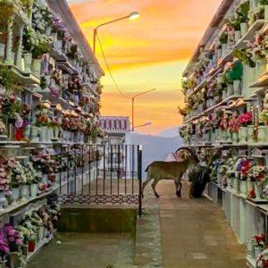 La curiosa imagen de un macho montés 'visitando' un cementerio