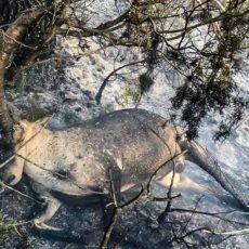 Un rayo mata a un macho montés e inicia un incendio en Teruel