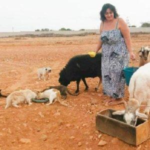 Ingresa en prisión la dueña de una protectora por maltrato animal