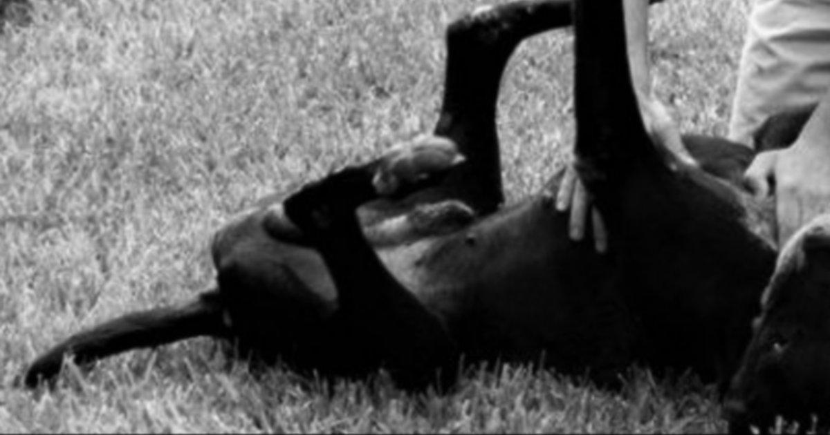 Una bloguera reúne 200 fotos mostrando cómo los cazadores 'maltratan' a sus perros