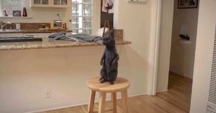 PETA falsea un vídeo contra el maltrato animal… y los pillan