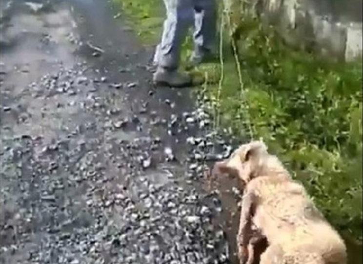 perro maltrato
