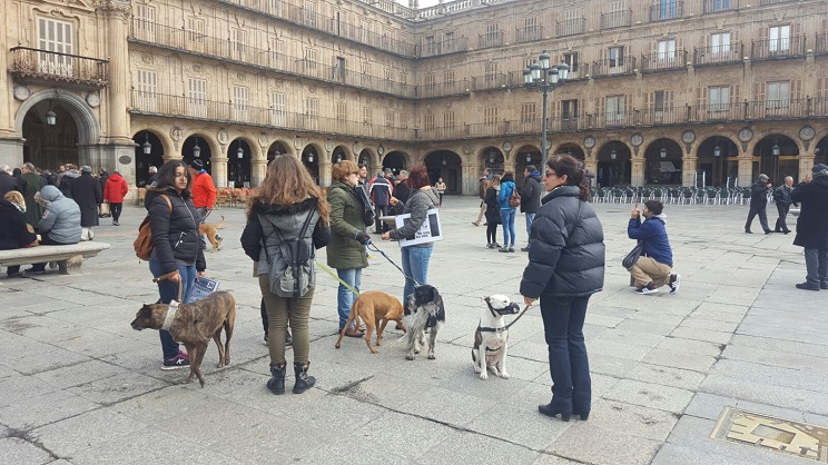 manifestacion animalismo
