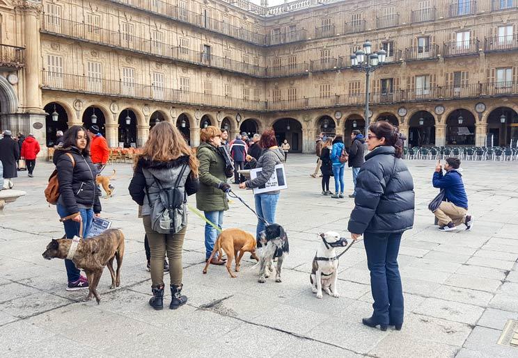 Las manifestaciones animalistas contra la caza fracasan en toda España