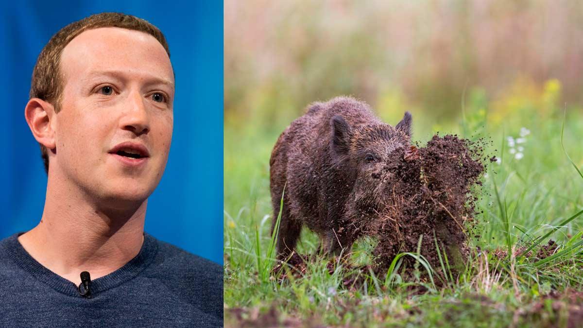 Mark Zuckerberg reconoce que caza jabalíes con arco
