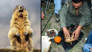 Mongolia Interior prohíbe la caza de algunos animales y alerta de peste negra
