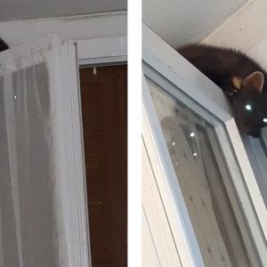 Entra en la cocina de su casa y se encuentra a este animal ¿Sabes qué es?