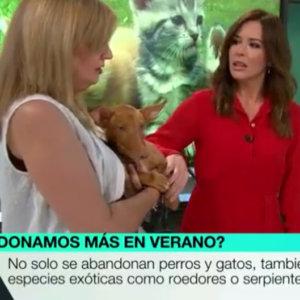 La Sexta acusa a los cazadores de abandonar a un cachorro «porque no serviría» para cazar
