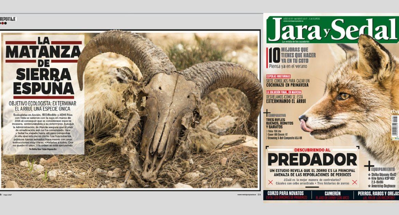 En mayo, Jara y Sedal saca a la luz las matanzas de arruís que se están llevando a cabo en Murcia