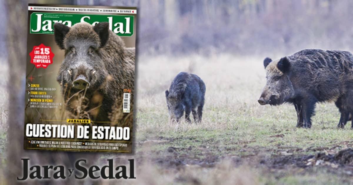 Los 15 grandes jabalíes de la temporada, en la revista de mayo de Jara y Sedal