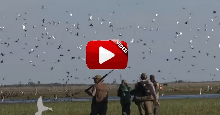 Probablemente uno de los mejores cotos de caza menor del mundo
