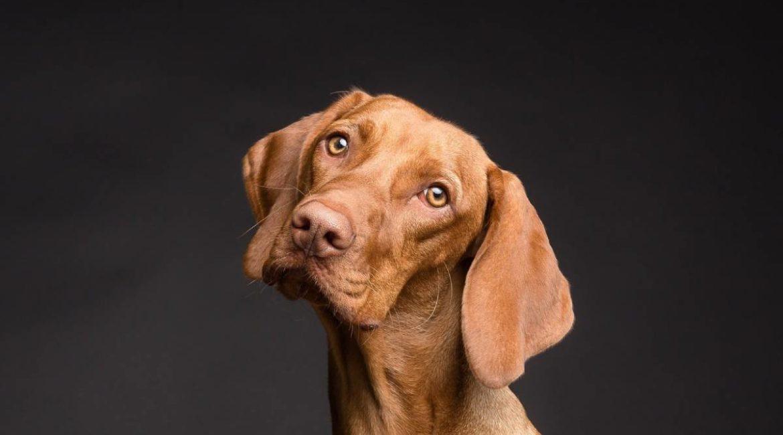 ¿Cuál es el mejor pienso para perros? Hacemos un análisis