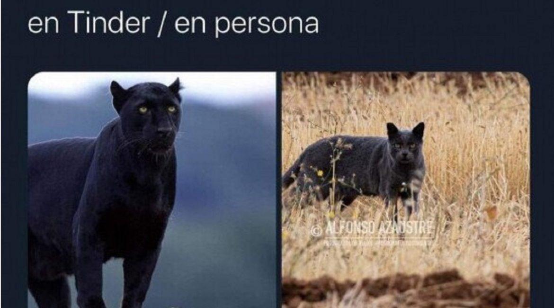 Estos son los mejores memes sobre el caso de la pantera de Granada