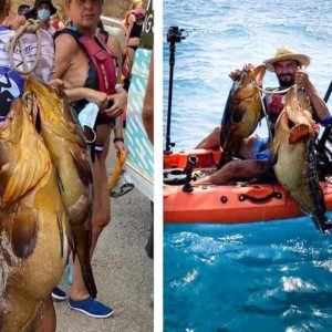 Pesca a jigging un enorme mero de más de 30 kilos en Alicante después de siete meses tras él