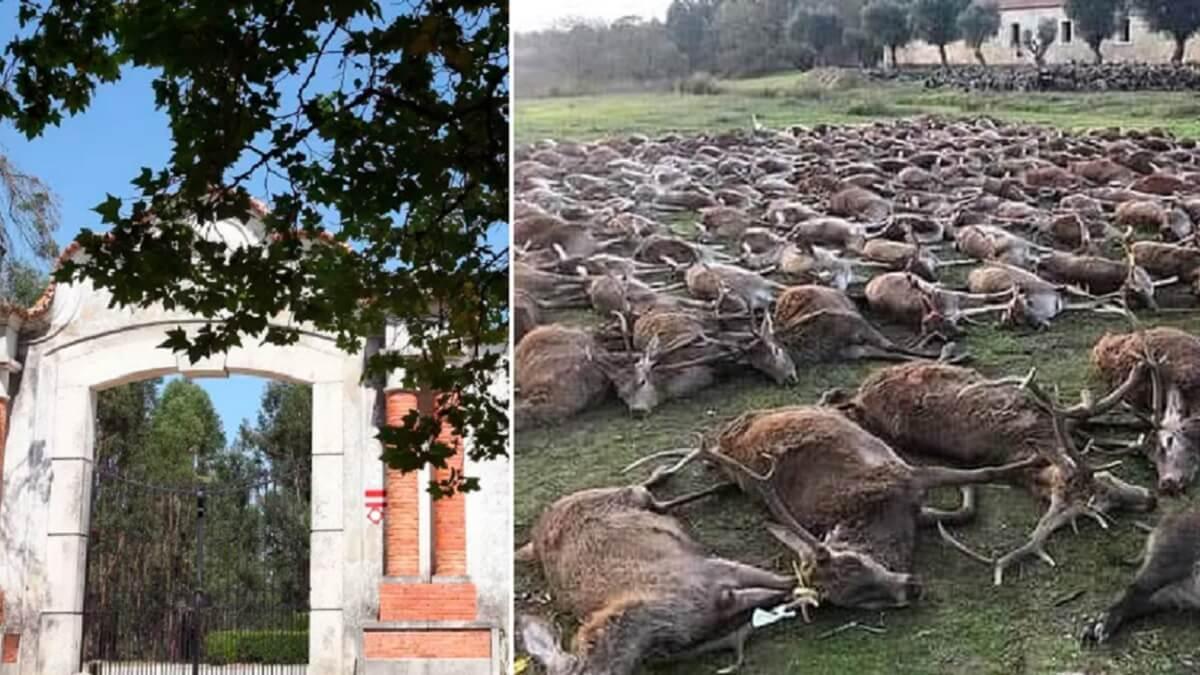 Los portugueses denunciarán a la orgánica española de la polémica montería «por pasarse del cupo»