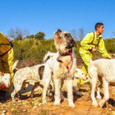 El BOJA hace oficial la declaración de la Montería y la Rehala como BIC tras una pataleta animalista