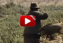monteria-espanola-trailer