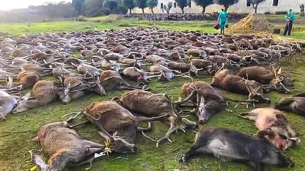 Indignación entre los cazadores españoles por la montería de Portugal: «No representa a la caza»