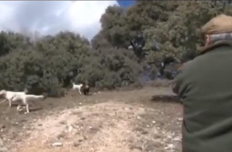 La reacción de este montero frente a un jabalí seguido de cerca por los perros incendia las redes