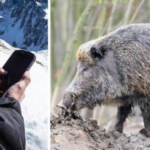 Castilla-La Mancha envía un SMS a sus cazadores para que colaboren en la detección de la PPA