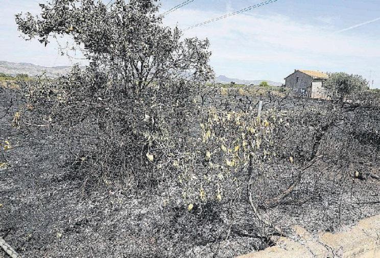 Muere un agricultor tras caer al fuego cuando quemaba restos de poda