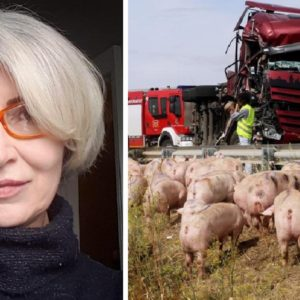 Muere una animalista atropellada por un camión que transportaba cerdos a un matadero