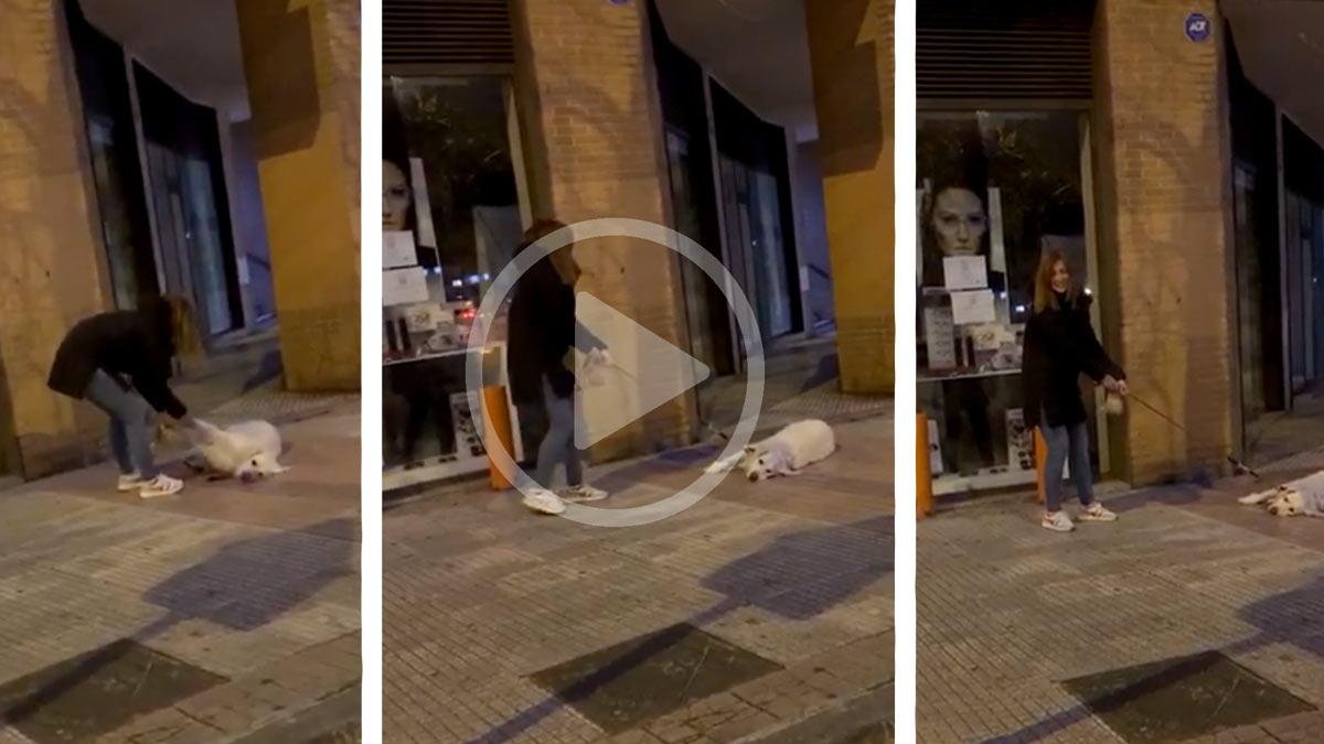 Saca a pasear a su perro durante la cuarentena y este se niega a caminar: «Claro, tanto paseo…»