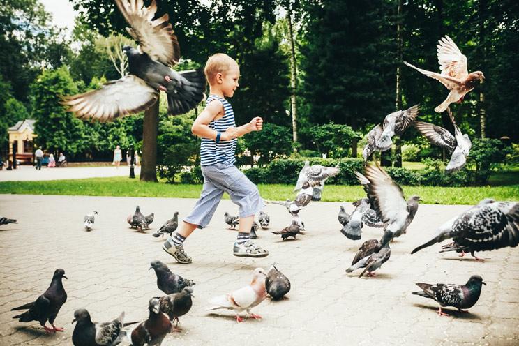 multa por perseguir palomas