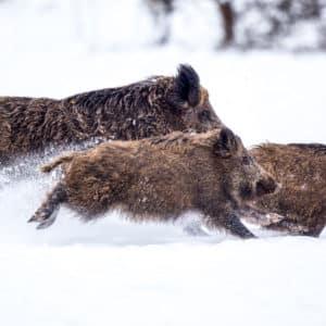 ¿Hasta cuándo permanecerá la nieve en mi coto? ¿Cuándo podré cazar?