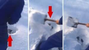 ¿Qué pieza se esconde bajo la nieve? La brutal resistencia de los animales en el frío te sorprenderá