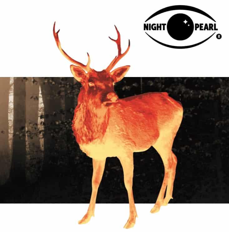 night-pearl