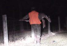 cazador salva ciervo