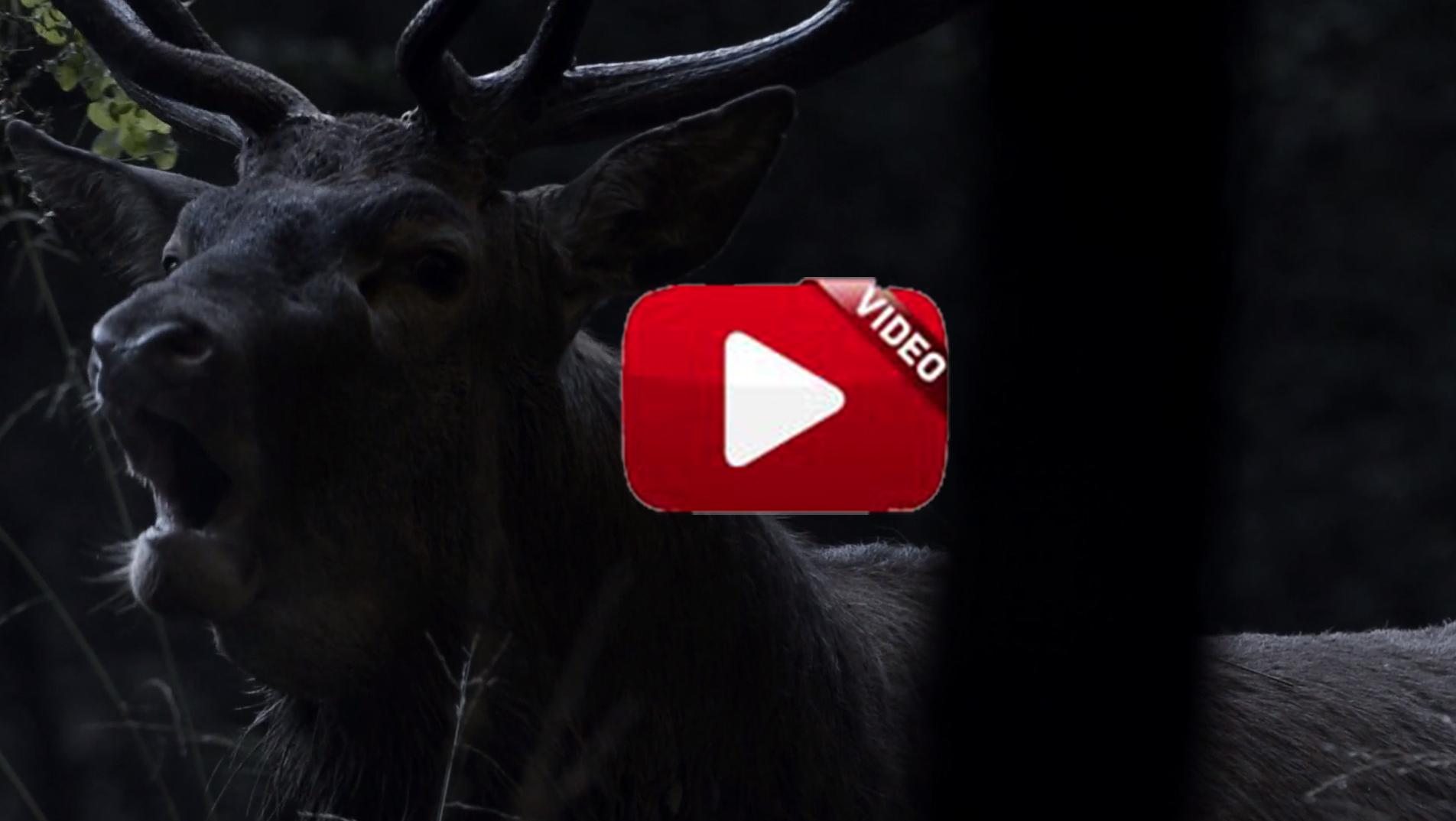 """""""La noche de los ciervos"""", sublime cortometraje"""