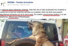 noticia falsa pacma