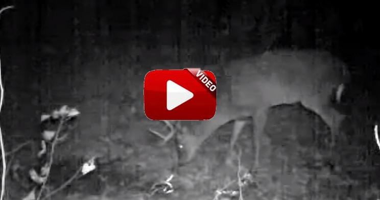 Este cazador aplica su propia orina en un paso de ciervos