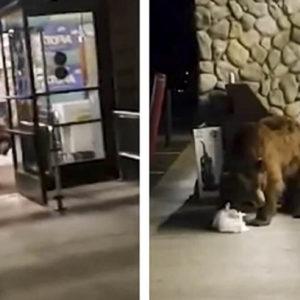Un oso se cuela en un supermercado y roba una bolsa de patatas