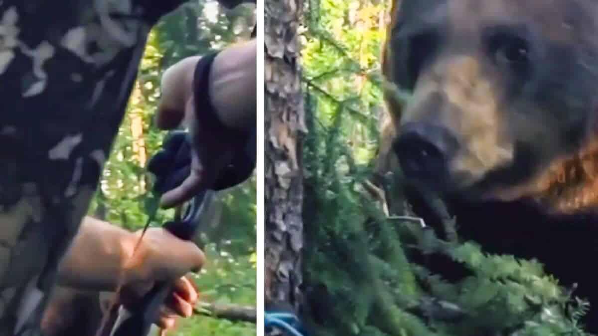 Un oso se para a sólo unos centímetros de este arquero: en este vídeo puedes ver cómo reaccionó