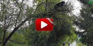 oso-arbol-ciclistas