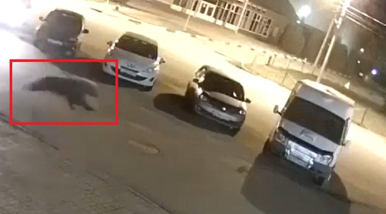 Un oso ataca y hiere a un hombre en mitad de la calle