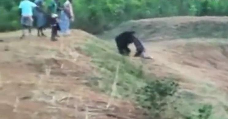 oso ataca a taxista