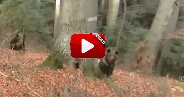 Un oso carga contra el príncipe Franz-Albercht