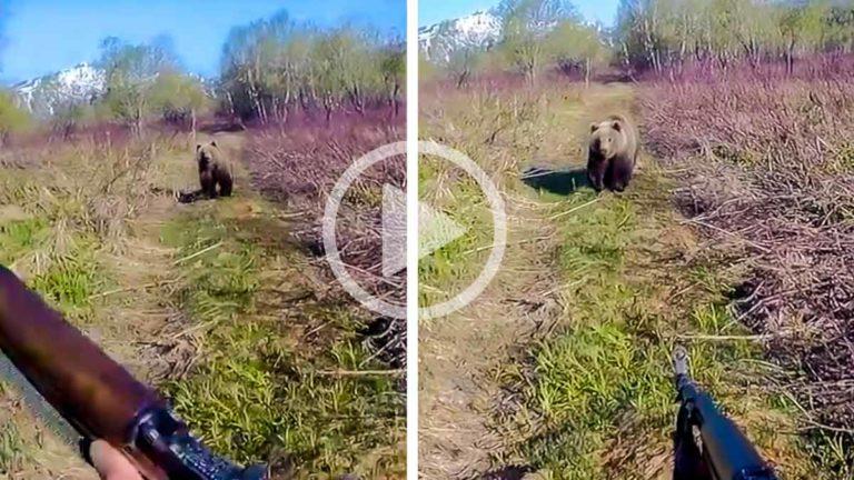 oso cazador