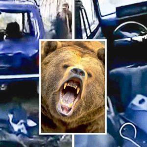 Se van a cazar jabalíes y cuando vuelven un oso ha destrozado su coche