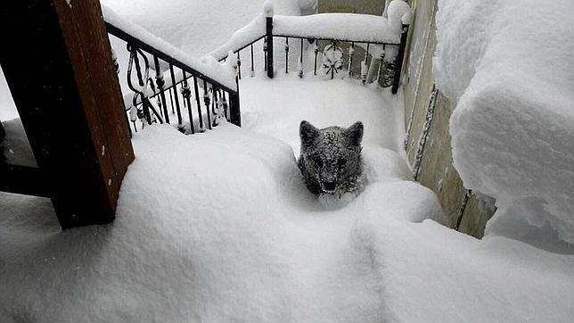 El pequeño oso en lo alto de las escaleras de la vivienda leonesa / Foto: EFE